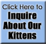 Inquire about our Siamese kittens