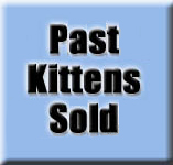 Past Kitten Sold Photos